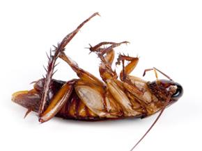 sch bek sch dlingsbek mpfung insekten marder m use tauben eutin ostholstein. Black Bedroom Furniture Sets. Home Design Ideas